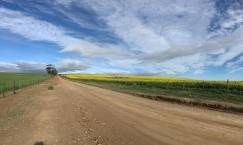 Drives alongside the canola fields